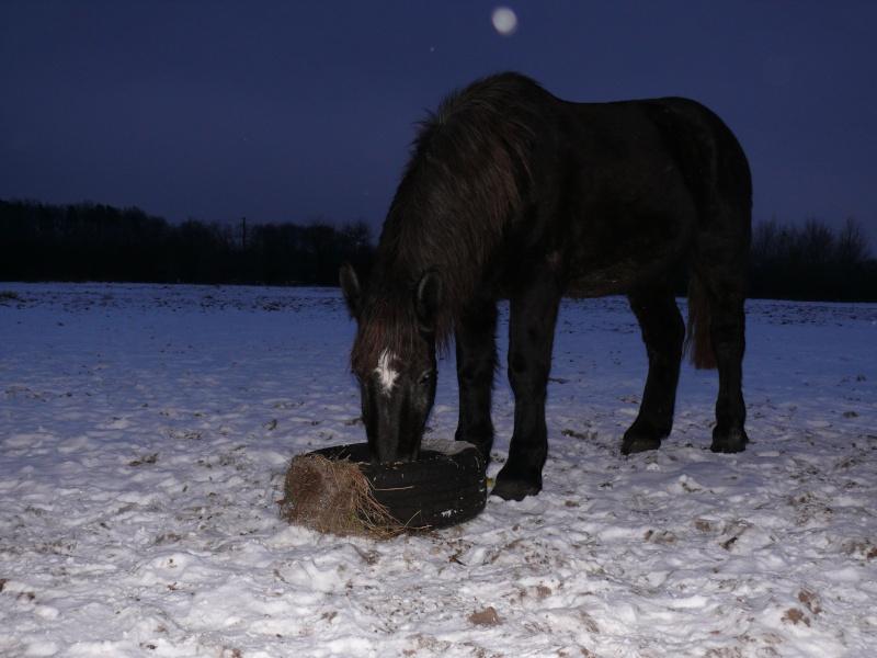pique nique sous la neige 03112