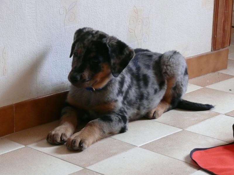 mon chien : peur bleue aujourd'hui ! 17610