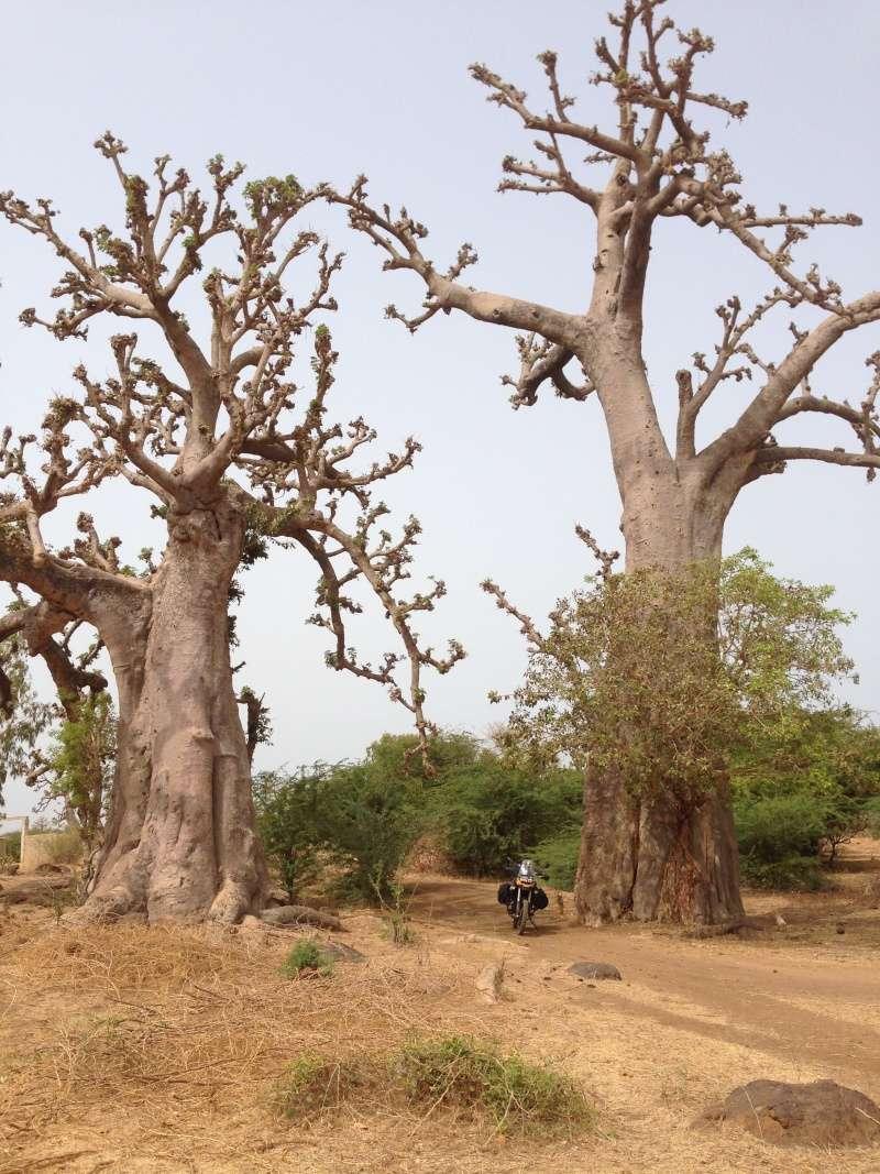 Un trail au Sénégal Img_3610