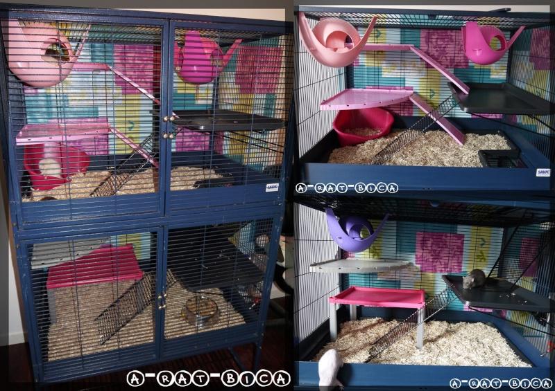 [VENTE] 3 cages - Royal suite - Vitahome rat NEUVE - Marchioro Tommy62 Rat_ro10