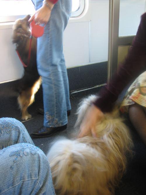 No cani sui treni dal 1 Ottobre!! TRENITALIA: vergognati!!!! Img_1210