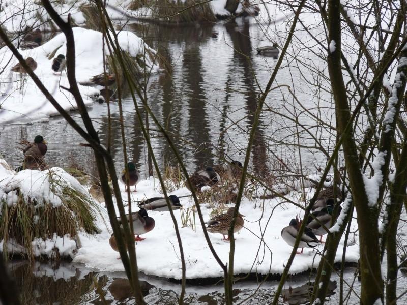 Balade dans le parc régional des Vosges du nord P1160018