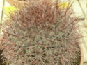 Chévreloup le 25 03 15 : Kipiks , euphorbias et succulentes 1ere partie  Denmoz11