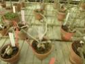 Chévreloup le 25 03 15 : Kipiks , euphorbias et succulentes  2eme partie  Euphor10