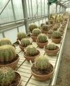 Chévreloup le 25 03 15 : Kipiks , euphorbias et succulentes  2eme partie  P1090810