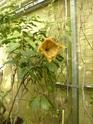 Chèvreloup le 25 03 15 : Quelques autres plantes  P1090911