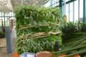 2 murs végétaux faits par mes collègues fleuristes  P1100610