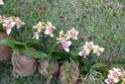2 murs végétaux faits par mes collègues fleuristes  P1100612