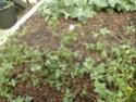 Photos d' Acanthaceae en fleurs actuellement  P1100810