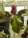 Chèvreloup le 25 03 15 : Quelques autres plantes  Porphy10