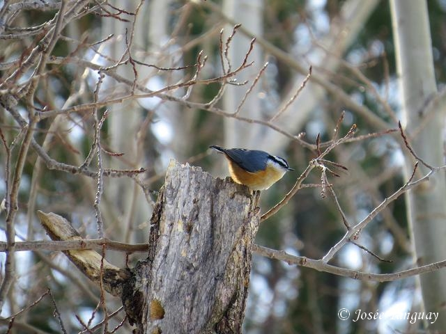 Petit oiseau Domain11