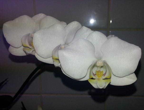 Coin orchidée 20150415