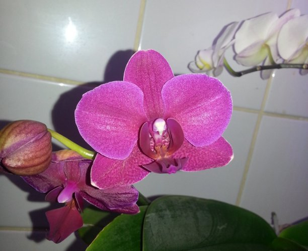 Coin orchidée 20150417