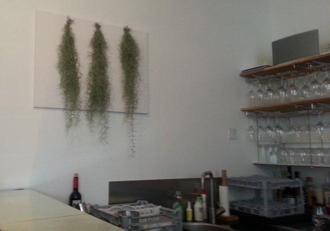 Tillandsia Unseoides - Café de Lausanne - Sion 20150517