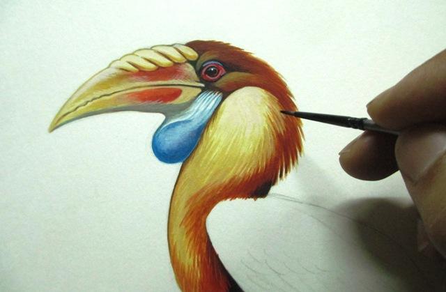 Sumba Hornbill (Rhyticeros everetti) Img_3910