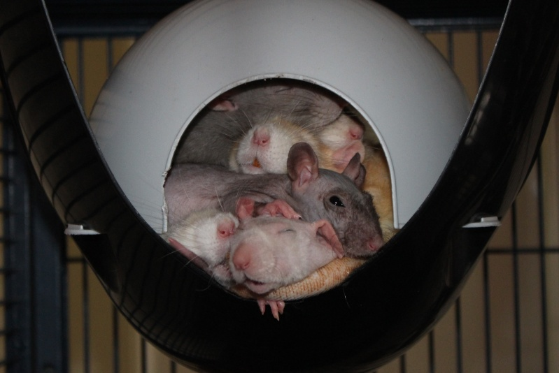 Les ratons de Random Img_4810