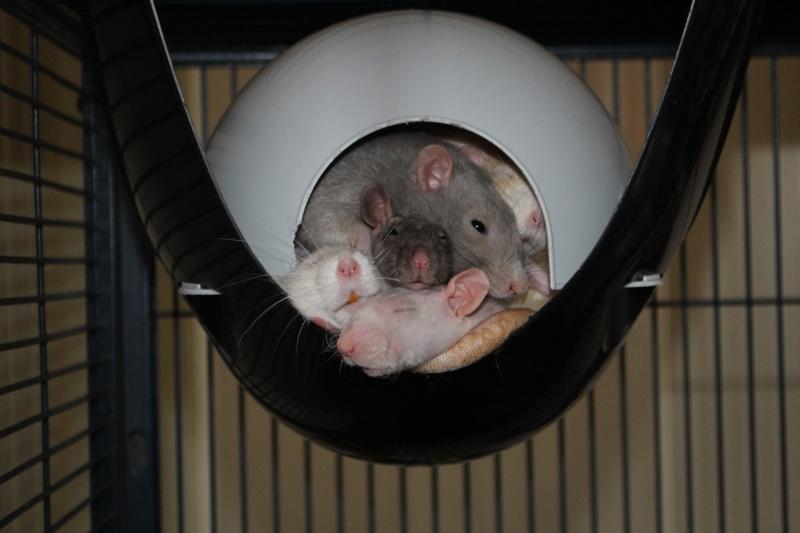 Les ratons de Random Img_4811