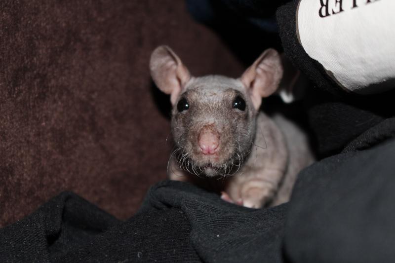 Les ratons de Random Img_5011