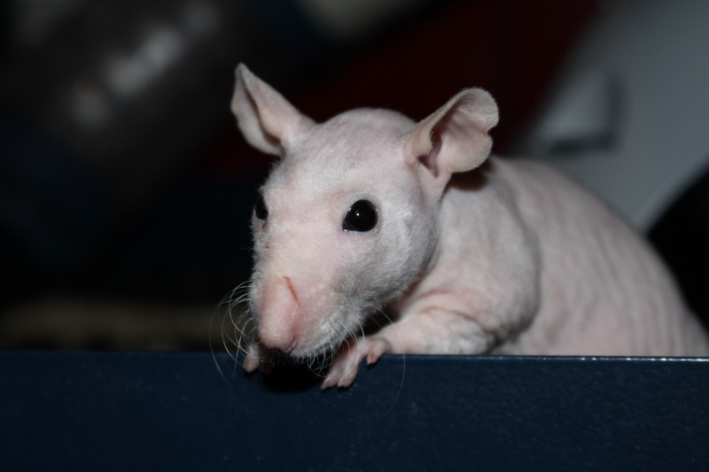 Les ratons de Random Img_5610