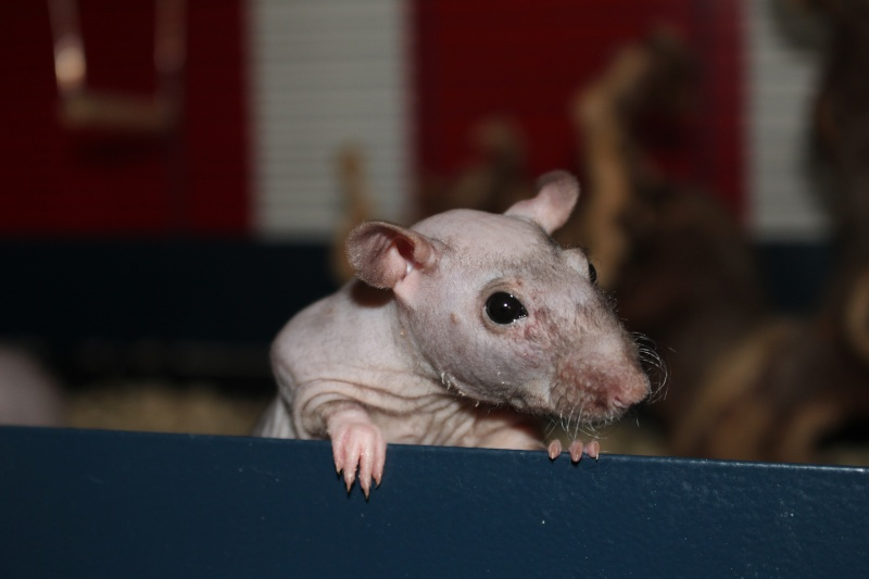 Les ratons de Random Img_5910