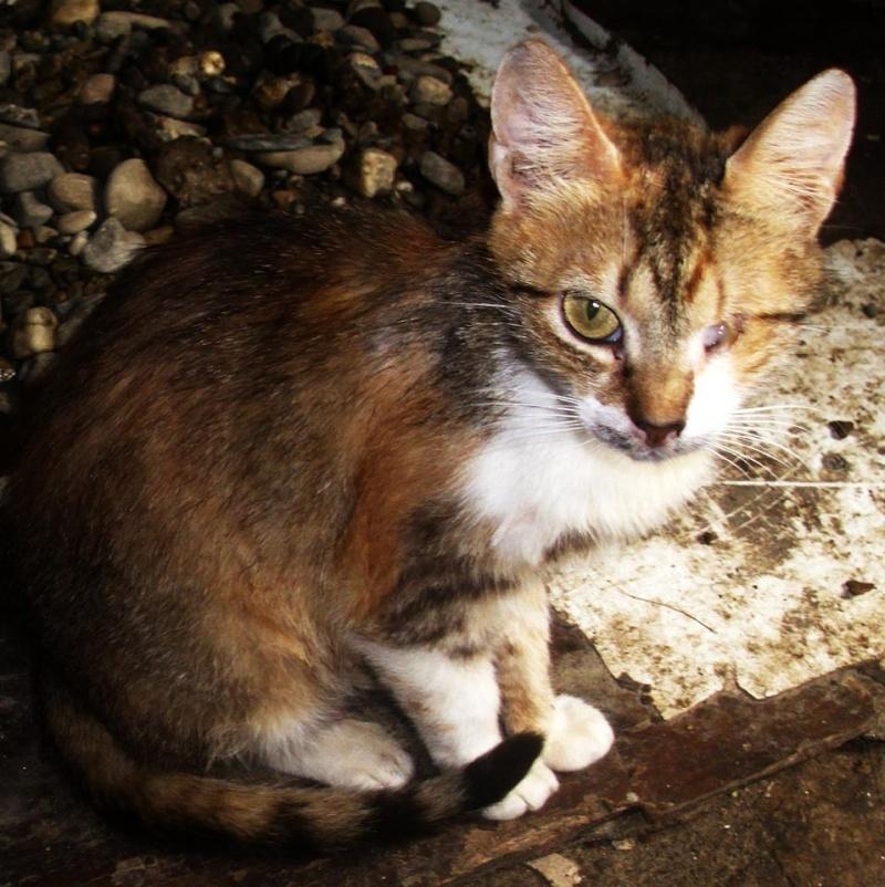DUCHESSE - chatte femelle, née 2011/2012, borgne - (PASCANI) - adoptée par Chantal Pascal (dpt 63) 10516910
