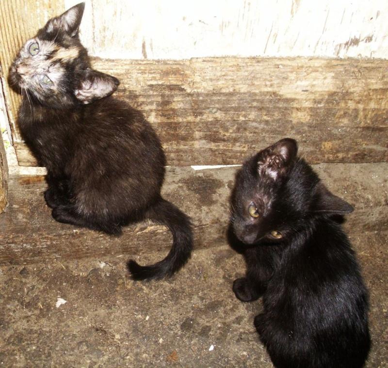 MYSTIQUE (ex-ONDINE) - chatte femelle, née 2014 - (PASCANI) - adoptée par Emilie B. (dpt 69) 10523710