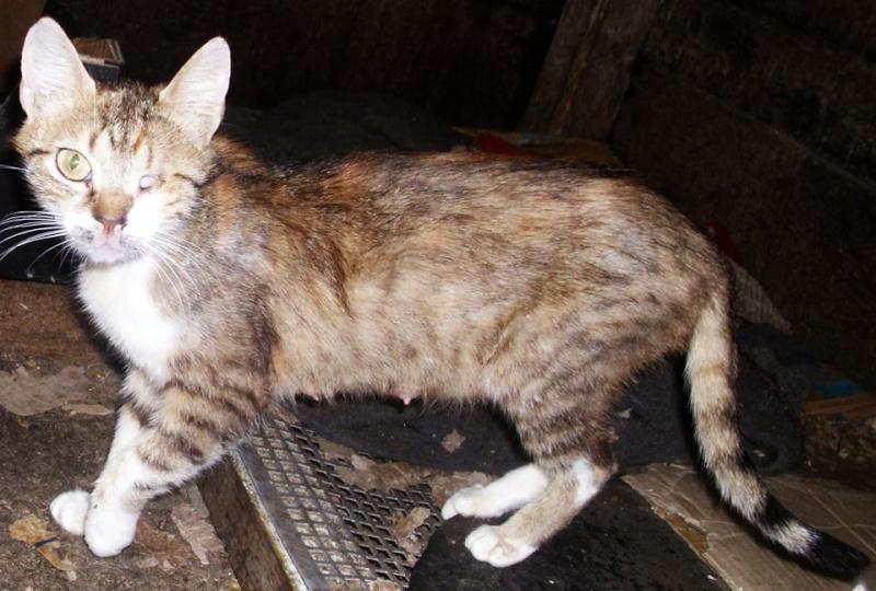 DUCHESSE - chatte femelle, née 2011/2012, borgne - (PASCANI) - adoptée par Chantal Pascal (dpt 63) 10543610