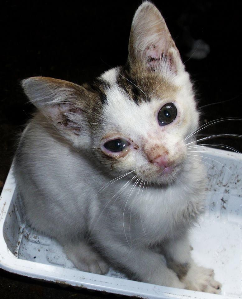 NOUKY (ex KREATURE) - chat mâle, né en 2014 - (PASCANI) - pris en charge par une autre association 10551810