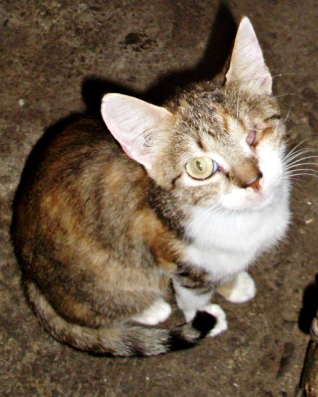 DUCHESSE - chatte femelle, née 2011/2012, borgne - (PASCANI) - adoptée par Chantal Pascal (dpt 63) 10660410