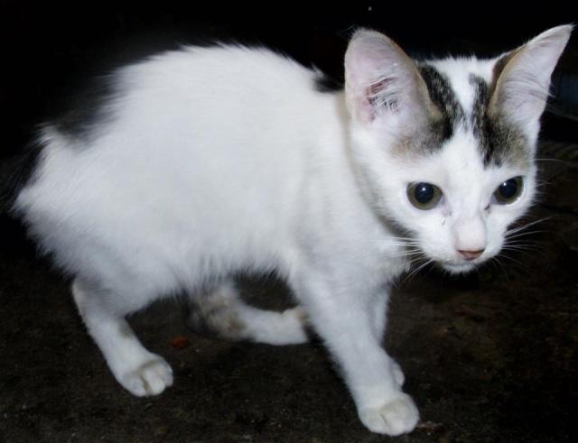 NOUKY (ex KREATURE) - chat mâle, né en 2014 - (PASCANI) - pris en charge par une autre association 10660710
