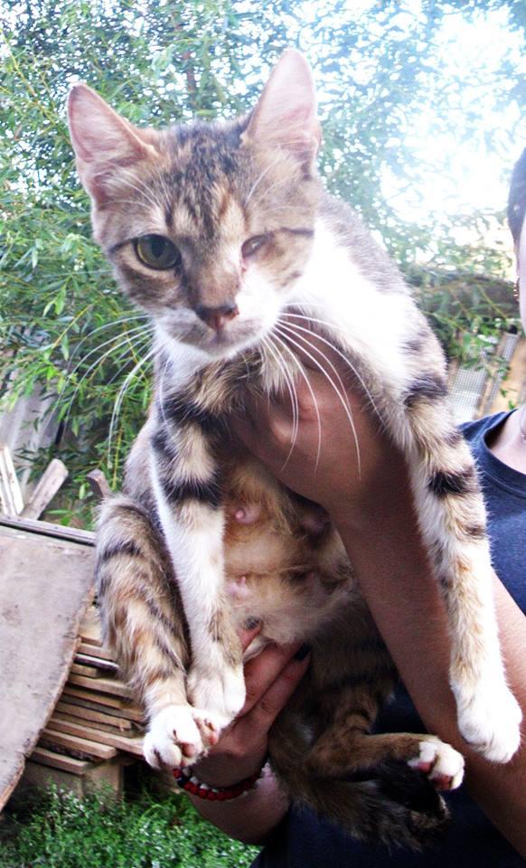 DUCHESSE - chatte femelle, née 2011/2012, borgne - (PASCANI) - adoptée par Chantal Pascal (dpt 63) 10660910