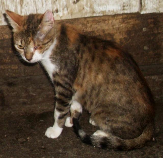 DUCHESSE - chatte femelle, née 2011/2012, borgne - (PASCANI) - adoptée par Chantal Pascal (dpt 63) 10660911