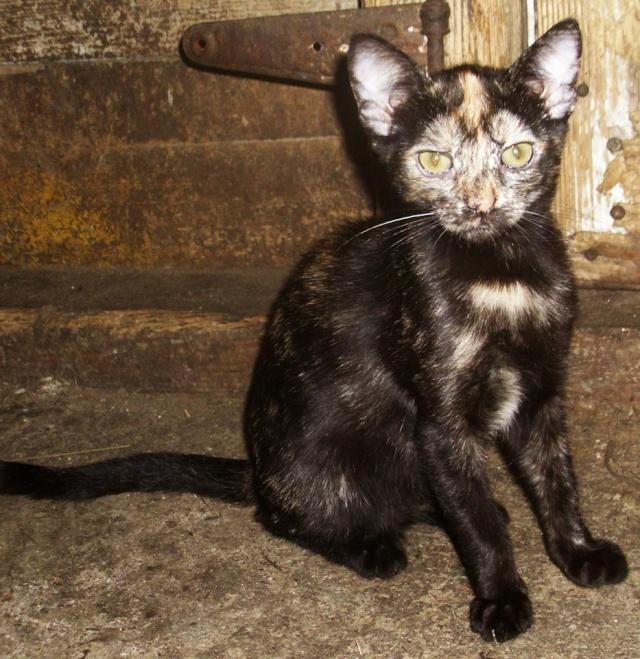 MYSTIQUE (ex-ONDINE) - chatte femelle, née 2014 - (PASCANI) - adoptée par Emilie B. (dpt 69) 10668510