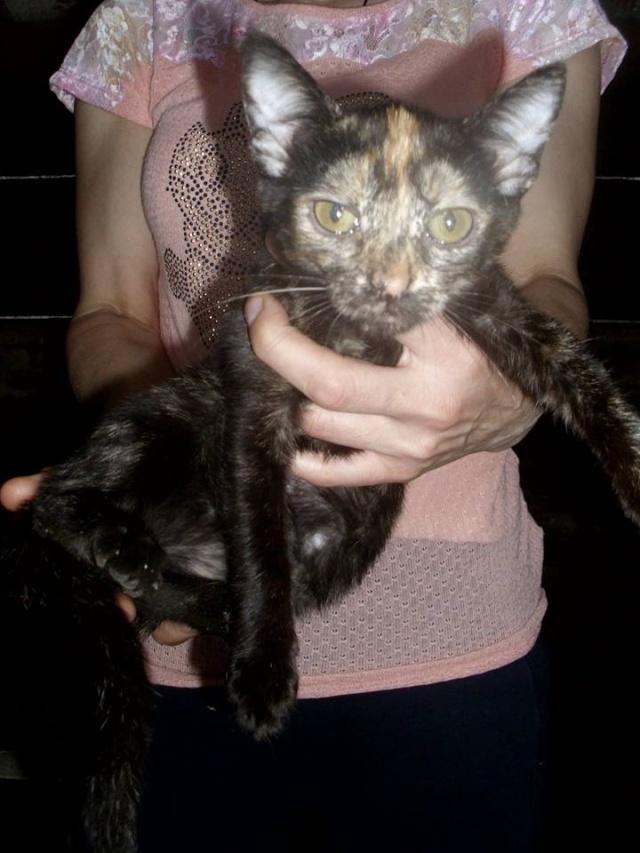 MYSTIQUE (ex-ONDINE) - chatte femelle, née 2014 - (PASCANI) - adoptée par Emilie B. (dpt 69) 10681510