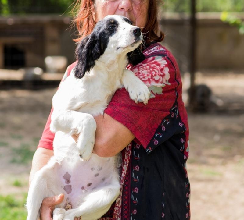 BONNIE- chiot femelle, croisée cocker née en mars 2015 - (CARMINA Bucarest) - adoptée par Evelyne (dpt67) Bonnie10