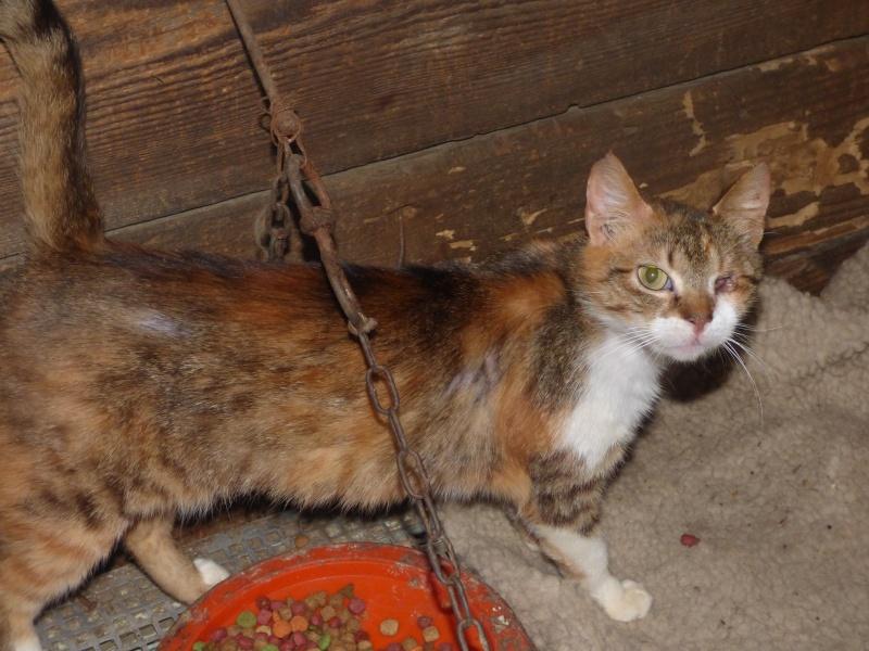 DUCHESSE - chatte femelle, née 2011/2012, borgne - (PASCANI) - adoptée par Chantal Pascal (dpt 63) P1000710