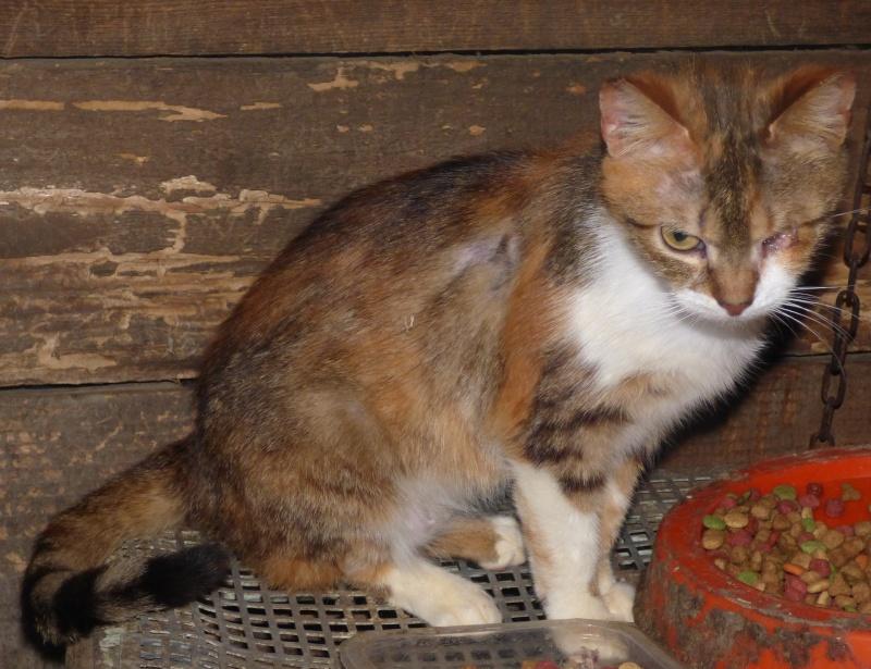 DUCHESSE - chatte femelle, née 2011/2012, borgne - (PASCANI) - adoptée par Chantal Pascal (dpt 63) P1000711