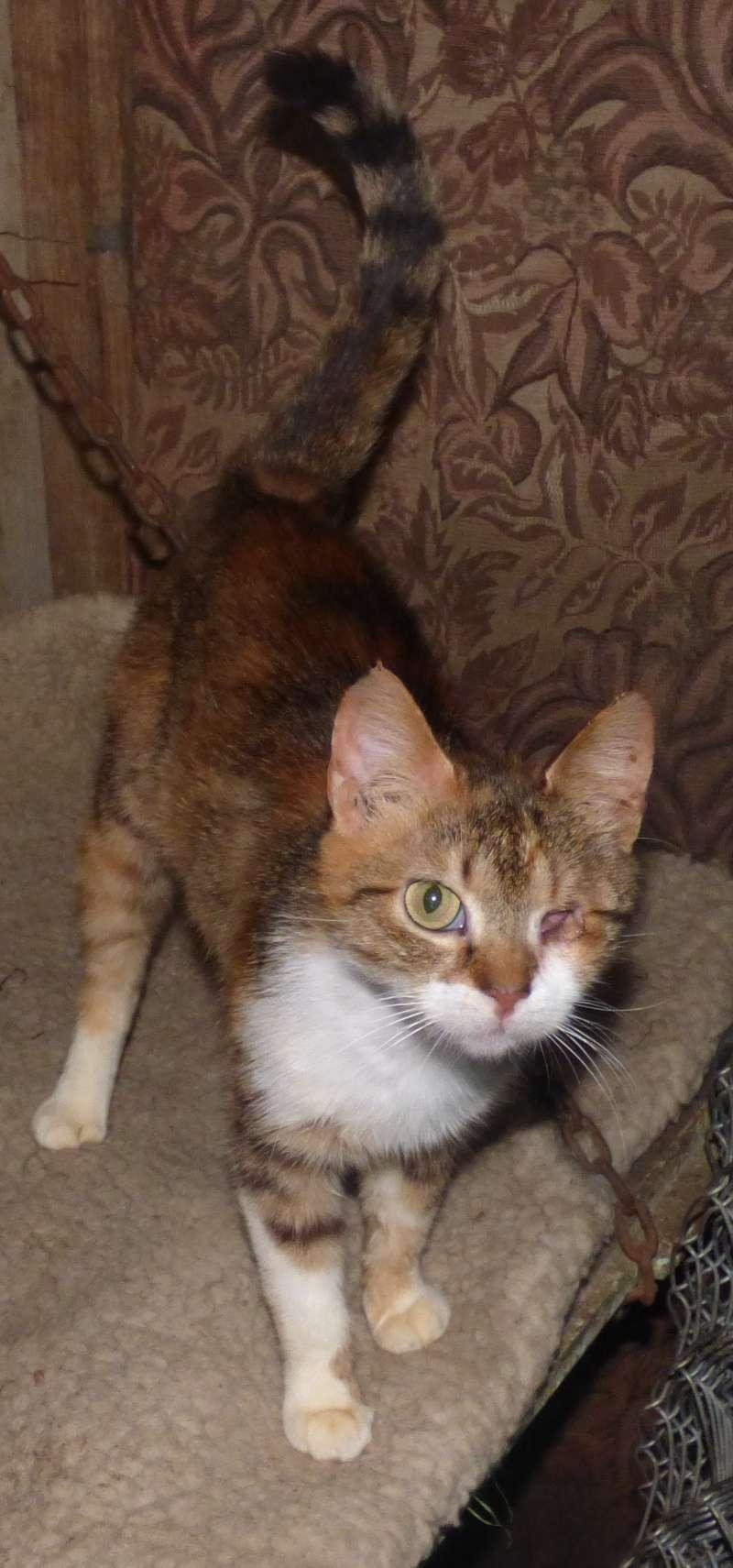 DUCHESSE - chatte femelle, née 2011/2012, borgne - (PASCANI) - adoptée par Chantal Pascal (dpt 63) P1000712