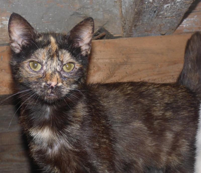 MYSTIQUE (ex-ONDINE) - chatte femelle, née 2014 - (PASCANI) - adoptée par Emilie B. (dpt 69) P1000713