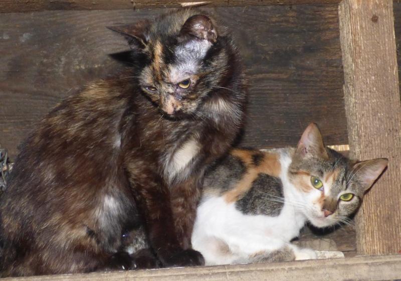 MYSTIQUE (ex-ONDINE) - chatte femelle, née 2014 - (PASCANI) - adoptée par Emilie B. (dpt 69) P1000714