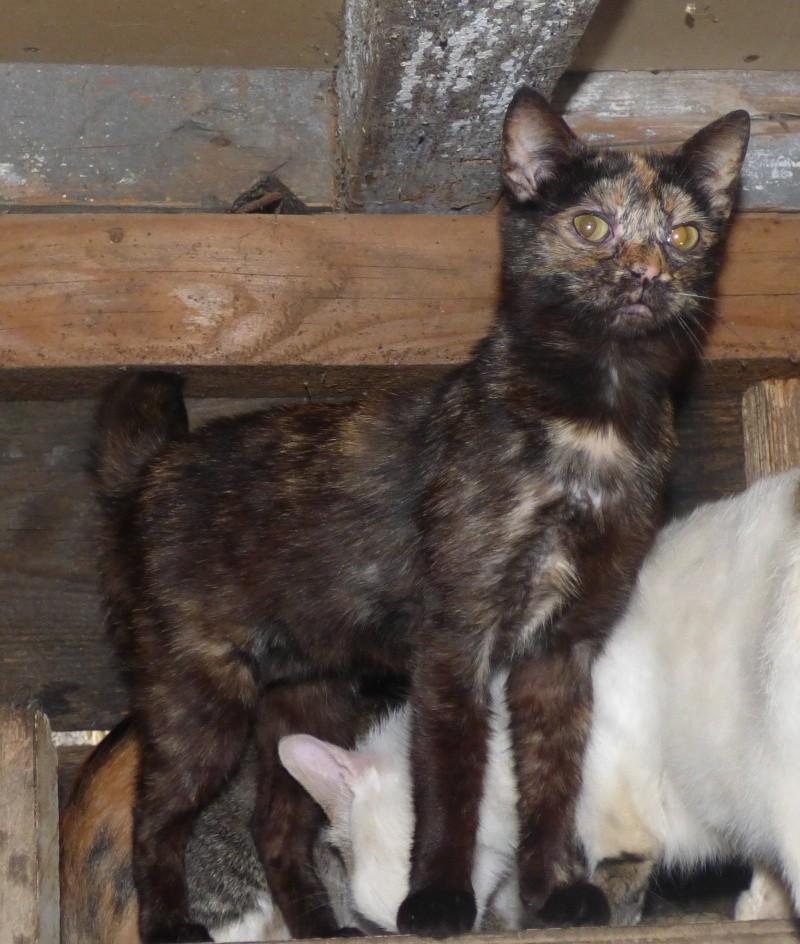 MYSTIQUE (ex-ONDINE) - chatte femelle, née 2014 - (PASCANI) - adoptée par Emilie B. (dpt 69) P1000715