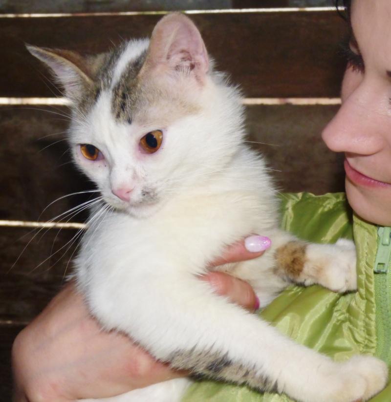 NOUKY (ex KREATURE) - chat mâle, né en 2014 - (PASCANI) - pris en charge par une autre association P1000720
