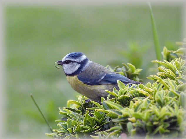 C' est le printemps , et qui fait son nid se couche . P1180510