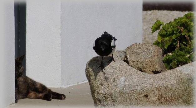 C' est le printemps , et qui fait son nid se couche . P1190010