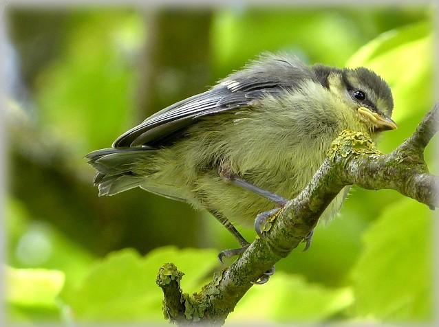 C' est le printemps , et qui fait son nid se couche . P1190410