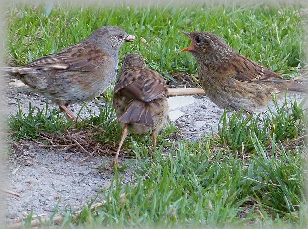 C' est le printemps , et qui fait son nid se couche . P1200310