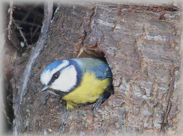C' est le printemps , et qui fait son nid se couche . P1250510