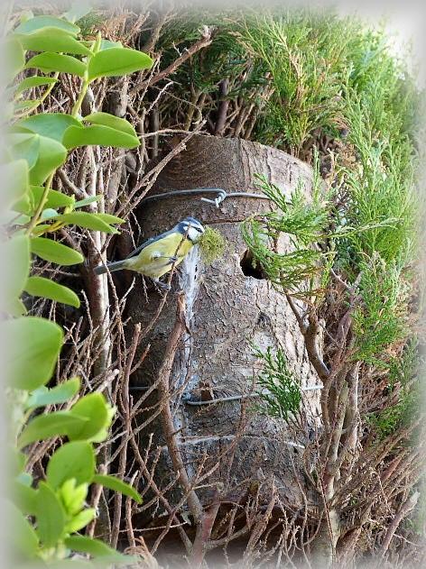 C' est le printemps , et qui fait son nid se couche . P1250511