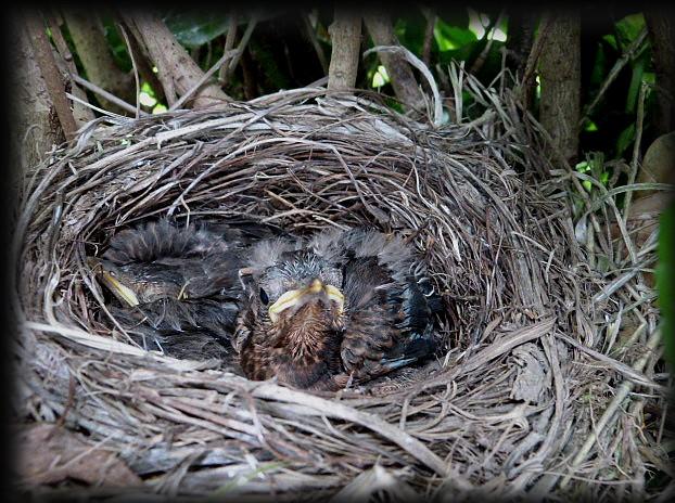 C' est le printemps , et qui fait son nid se couche . P1250810