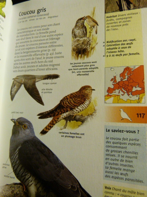 qui suis je ? pour les ornithos en herbe P1260910